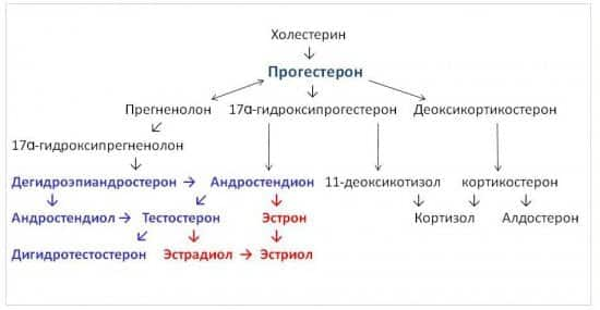 Синтез прогестерона